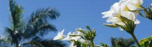 Guadeloupe Sky